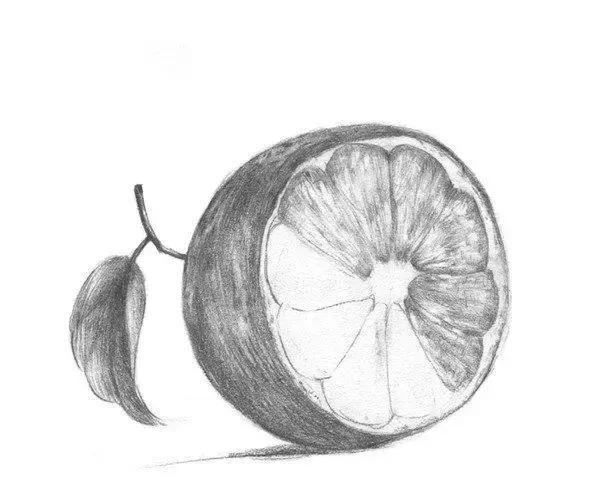简单植物素描技巧入门教程,开心果,橙子,邹菊花