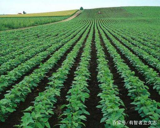 技巧的操作方法及步骤飞针测试机种植土豆图片