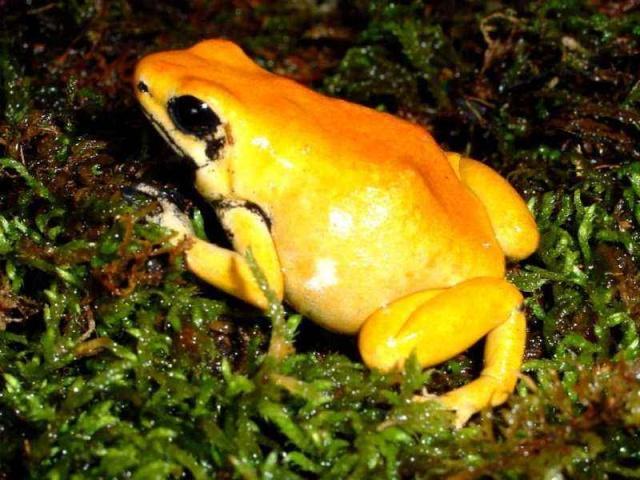 青蛙上最毒的世界,nz#1毒可v#1一万五千人,平长表情包针图片