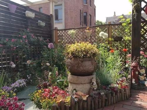 在種滿月季的庭院裏花樣棲居 南京評選出最美陽台庭院
