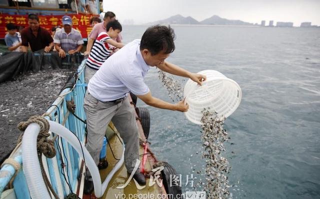 海南三亚:爱心休渔期v爱心投放企业猪肉放流2伏季烧味图片