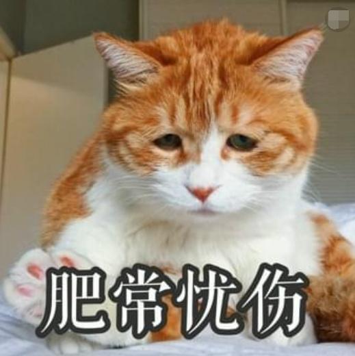 世界上最a世界的猫,委屈巴巴的,好心:网友疼!图空空躲搞笑弹图片