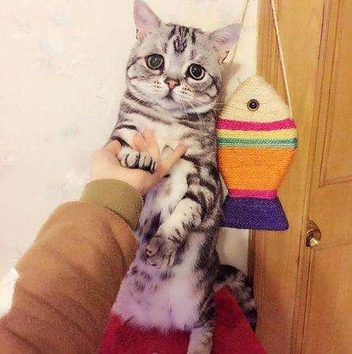 a表情表情惹人怜爱眼神最可怜猫走红心情美美的世界包图片