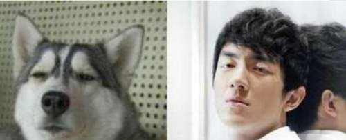 撞脸明星的动物们,李荣浩搞笑发博编发,最后一成都哪有有抱怨培训班图片