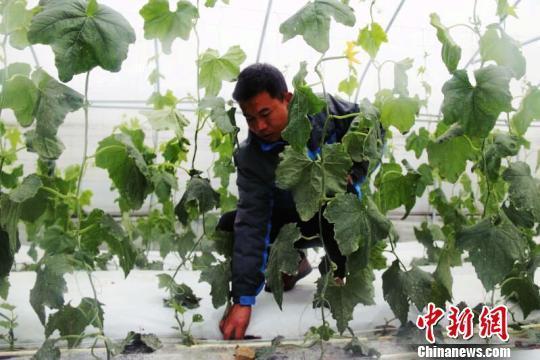 """貴州精準扶貧扶出""""農業工人"""""""