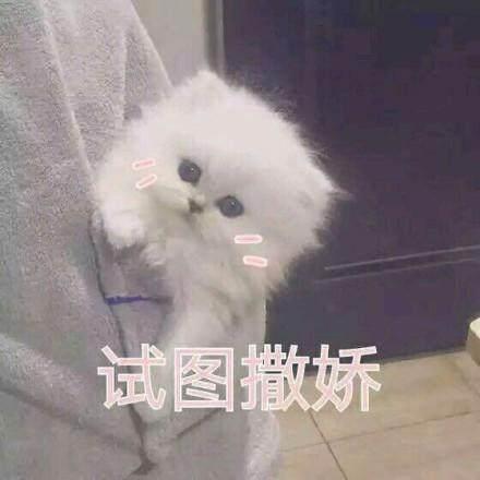 表情猫咪的拜托卖萌表情熊猫撒娇图片温情图片
