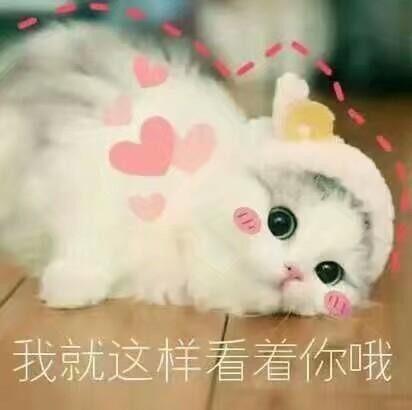 猫奴必备1表情搞笑萌萌可爱猫咪喷可乐表情包牵朕的手,就图片