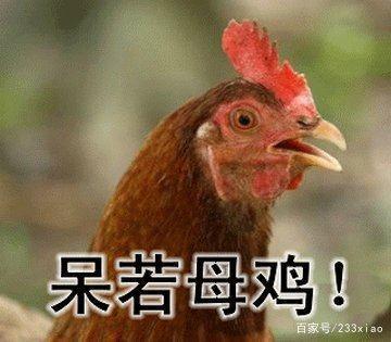 鸡的搞笑动图表情文字搞金qq恶表情馆长包图片