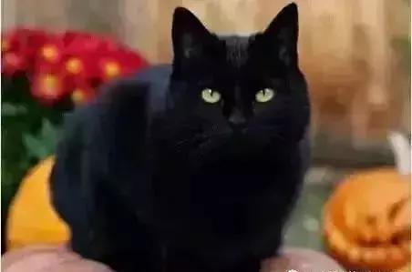 以后斗图还怕谁?城管人专属微信动态来啦!表情包猫猫表情可爱图片