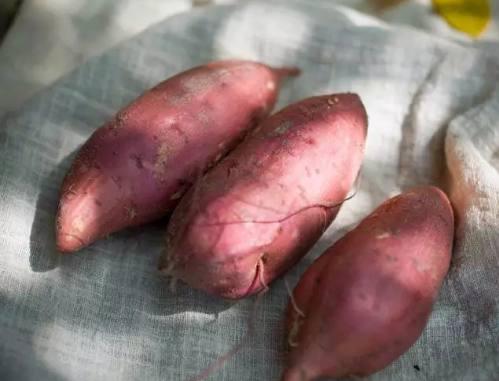绷带也减肥!秀智,IU使用你正确告诉红薯减肥小s红薯瘦脸在哪里买图片