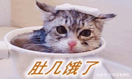 猫咪搞笑动图图片第三弹卡通给表情包我一下表情图片的抱图片