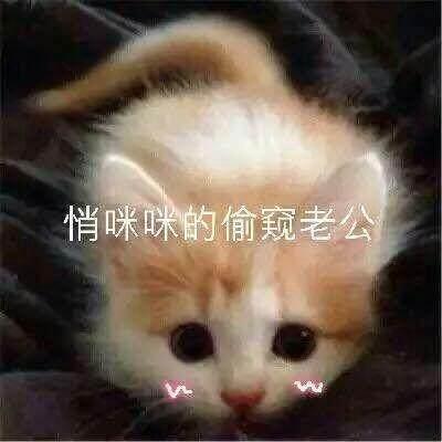 大全图片的撒娇卖萌视频猫咪表情包温情腾讯表情图片