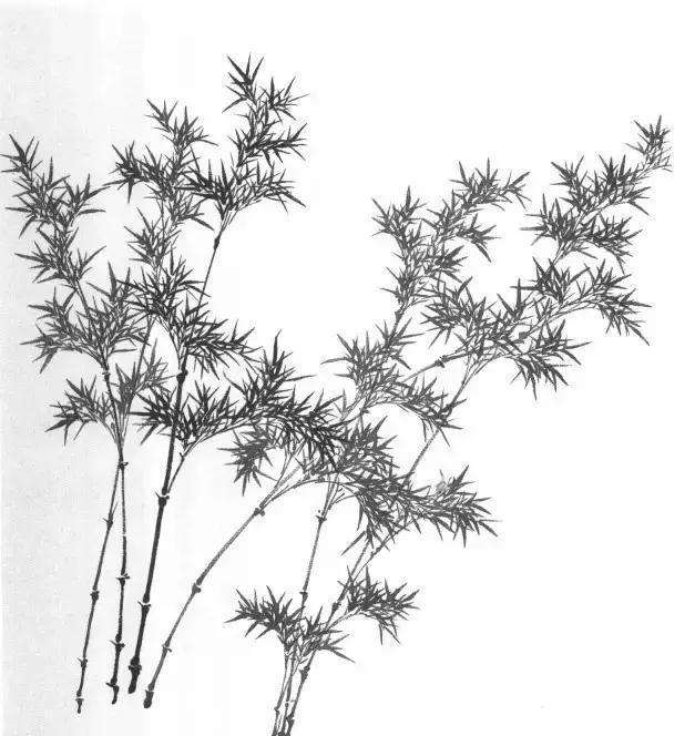 树的根茎叶 结构图