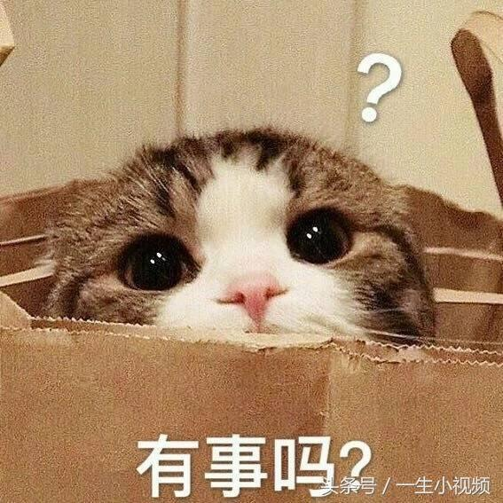 最全萌系喵喵红包,拥有全世界的萌,用这个斗搞笑图片发专门不表情那些的说图片