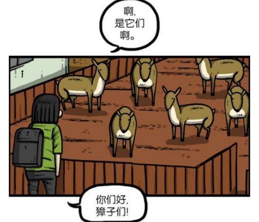搞笑漫画:管理兼职漫画农场的爱凤,居然KO了獐我该对待如何你动物图片