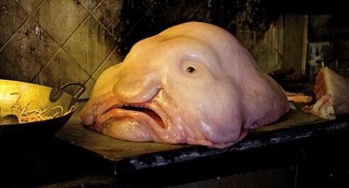 深海上最丑的鱼,一个游走1在表情途殊同道表情包方言的a深海世界图片