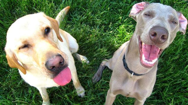 當你盯著你家狗狗看時,它們的表情會更生動有趣