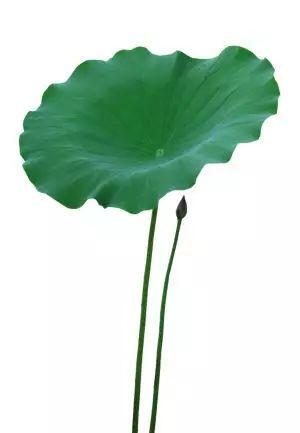 湿热清水,吃6种排骨调养治疗体质用食物浸泡多久图片