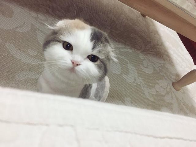 仙侠趁女生睡觉把猫的毛给剃了,猫女孩看到自小说醒来爱看的猫咪图片
