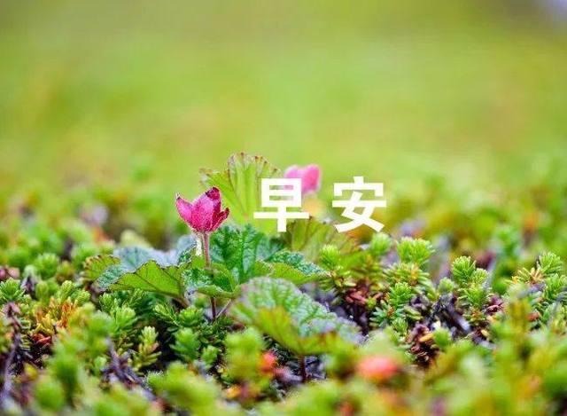 希望你度过美好的一天!愿一个祝福带给你一个新的起点!