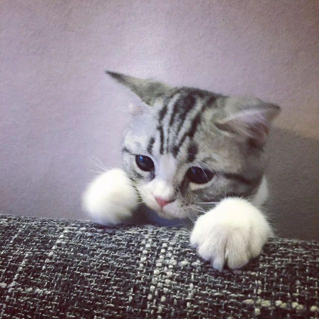 """沒有最瘋狂隻有更瘋狂:一隻虛擬""""寵物貓""""叫價13億元"""