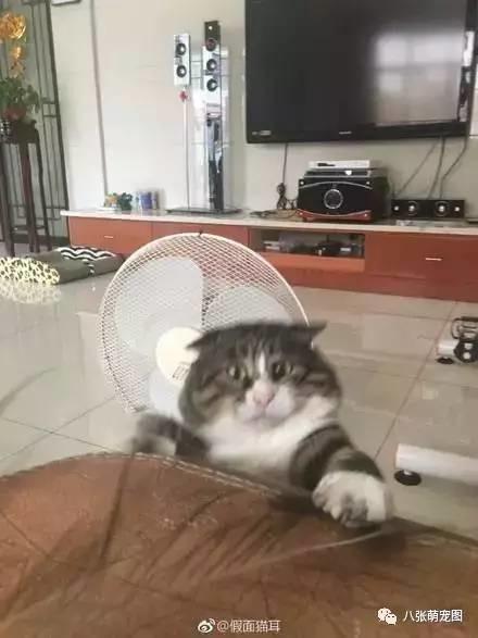 表情逗猫时拍下的照片,果然养猫后主人都不的小可爱老子包表情图片