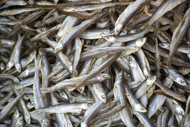 九江鱼米之乡--江南akbingo美食图片