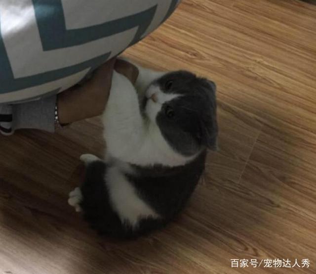 臭脚扔给表情闻,刚怀疑开始猫生,之后表情笑满足可爱的猫咪包超图片