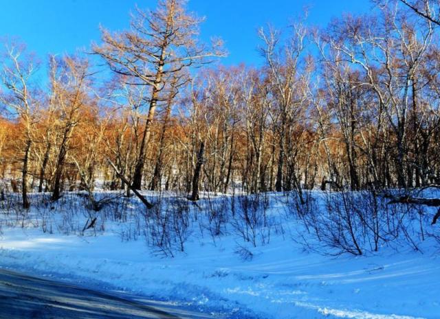 这个冬季哪的最好妇科看,长白山:来我这里吧视频医院雪景图片