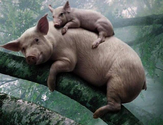 搞笑图片笑话幽默爆笑人类搞笑狐狸图动灰的gif:亲爱的段子猪图片