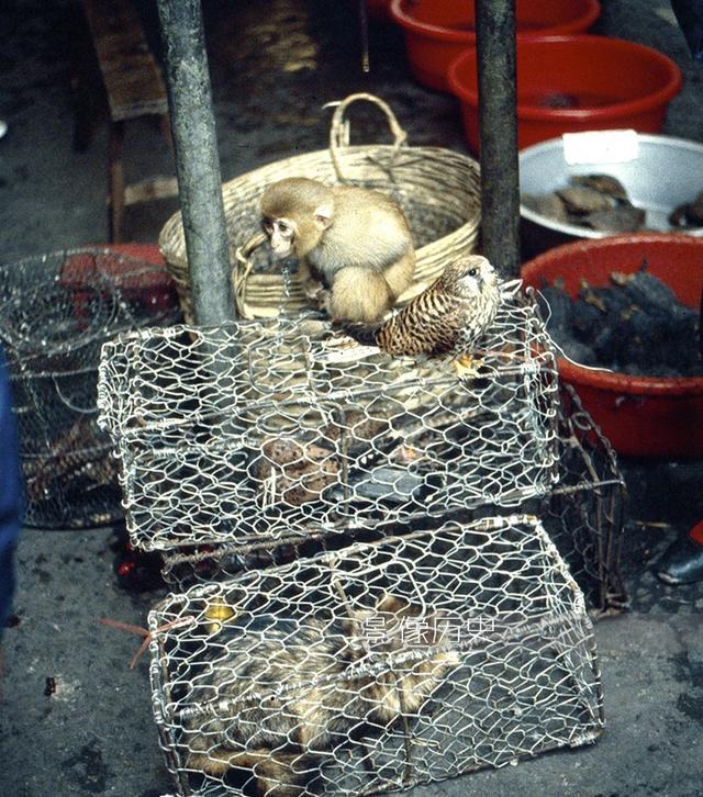 八十年代广州的菜市场 有些东西让你目瞪口呆