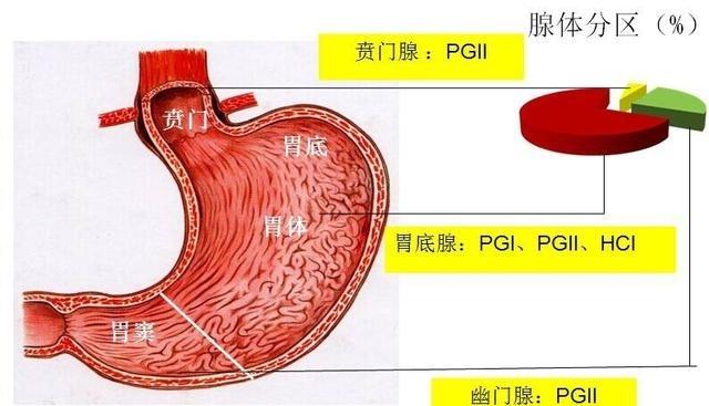 体检报告解读:胃蛋白酶原