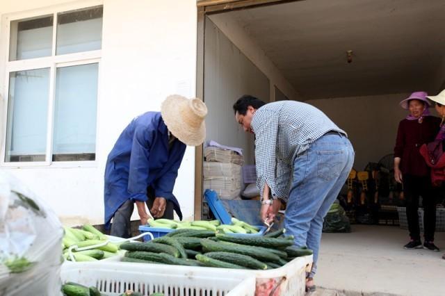 收益高了,日子好了,信阳怡丰园农业合作社走出