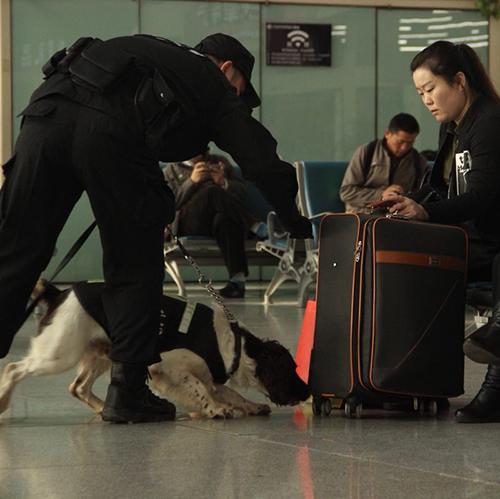 【新春走基層】十年——警犬工作隊霍焱的芳華歲月