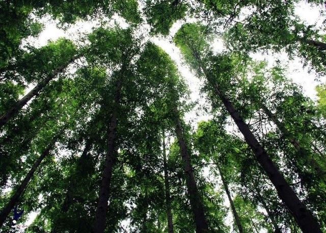 树有风水,民间却流传这些迷信禁忌,第三个我们