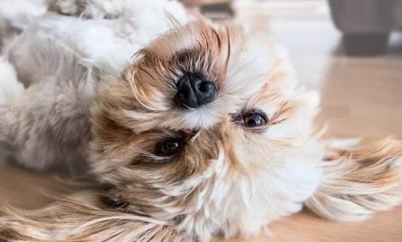 狗狗为什么会哭?除了感动这几个原因你知道吗