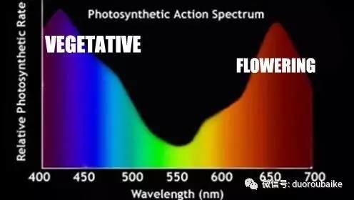 紫外线波长穿透玻璃,对多肉植物生长的影响如