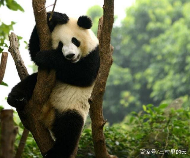 各国国宝级动物,日本的是朱鹮,网友:还是最后一
