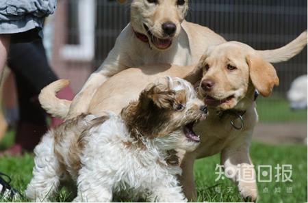 狗狗皮肤病可以用肉眼判断吗?