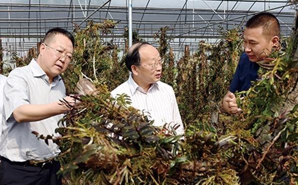 李后强调研丘区经济发展情况 鼓励金堂县做大