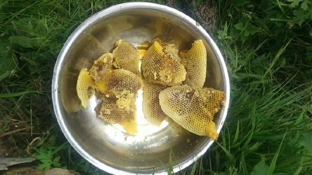 火了!农民养蜂出奇招,蜂蜜引顾客抢购!养蜂现场