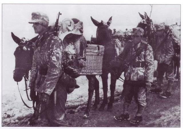 伞兵和党卫军,被遗忘的精锐之师,德国雪绒花部