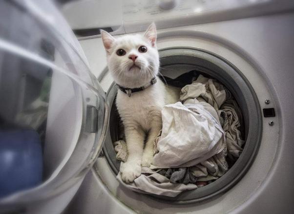 洗衣机买波轮的还是滚筒的好?听师傅一说,才知