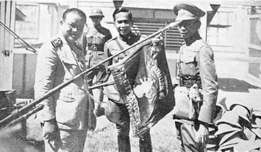 此国是东亚法西斯国家,派大象部队入侵中国,刚