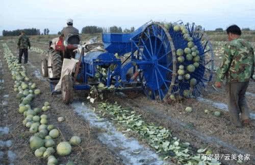 同样都是西瓜,为什么它籽会比较受欢迎?